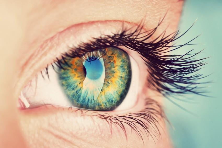 Das Auge – eine kurze Erklärung